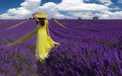 Ramo Flores Primavera, Flores para Regalar, Floristería de Salamanca, Entregas de Ramos de Flores, Floristas Profesionales