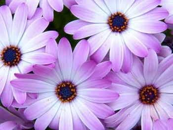 Ramo Flores Bouquet de Flores Extra, Floristería Online, Ramos de Regalo, Floristas Profesionales, Enviar Flores Urgentes,Comprar Flores en Salamanca