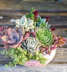 Plantas para Regalar, Regalar Plantas en un Cumpleaños, Regalar Plantas en un Nacimiento, Regalar Plantas para el Día de la Madre, Floristería Online