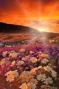 Floristerías Salamanca, Floristeria online, Floristeria El Corte Inglés, Floristerias baratas en Salamanca, Dia de la mujer ramos de flores, envío urgente de flores