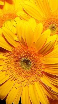 Enviar flores urgentes a domicilio baratas, enviar flores tonos alegres, flores de aniversario, flores, cestas de flores, flores nacimiento
